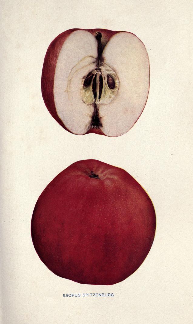 pièce apple origine