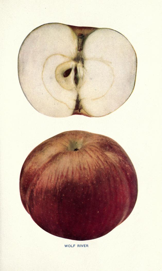Why Your Supermarket Sells Only 5 Kinds of Apples – Mother Jones